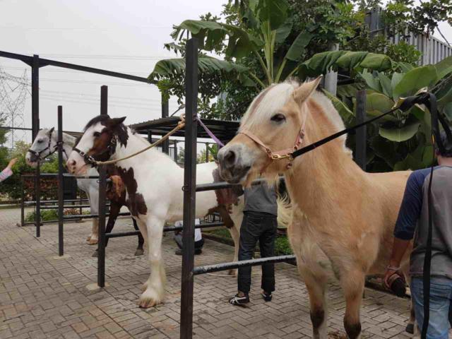 Image Result For Kuda Poni